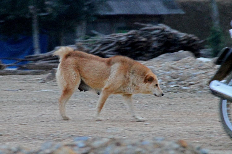 Màu sắc của chó Bắc Hà