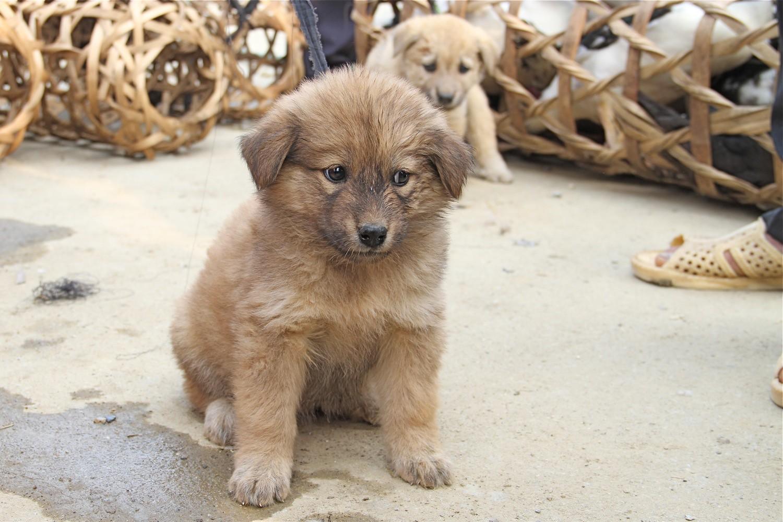 Những lưu ý khi nuôi chó Bắc Hà