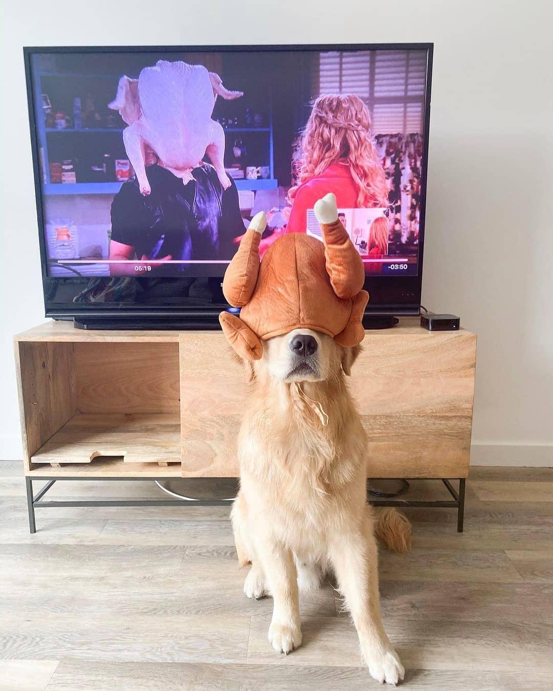 Độ tuổi ảnh hưởng tới giá chó Golden