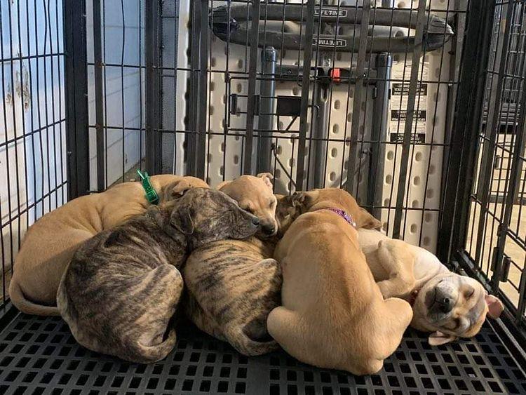 Dinh dưỡng chó Phú Quốc