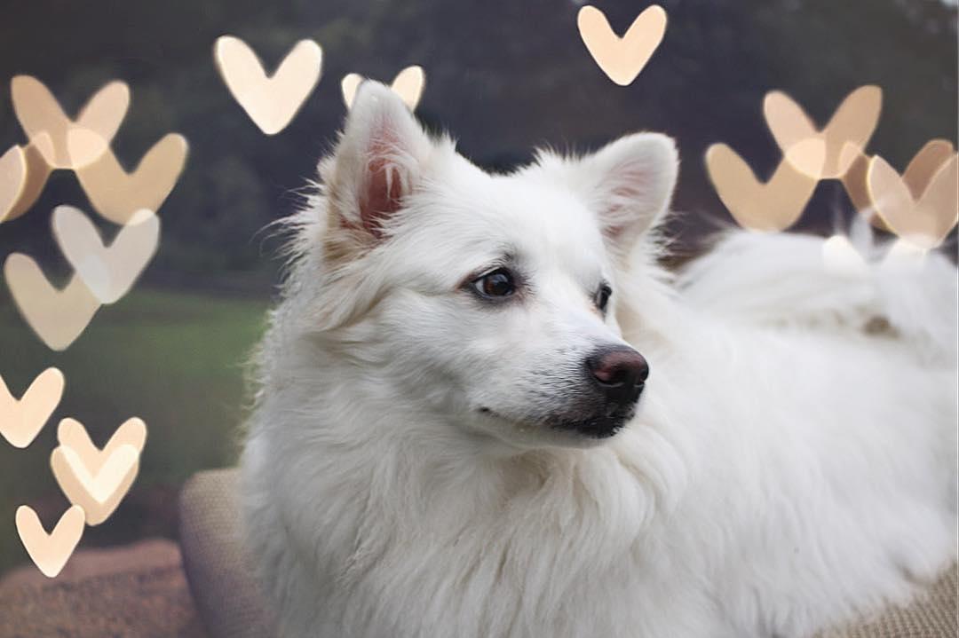 Môi trường sống chó Eskimo