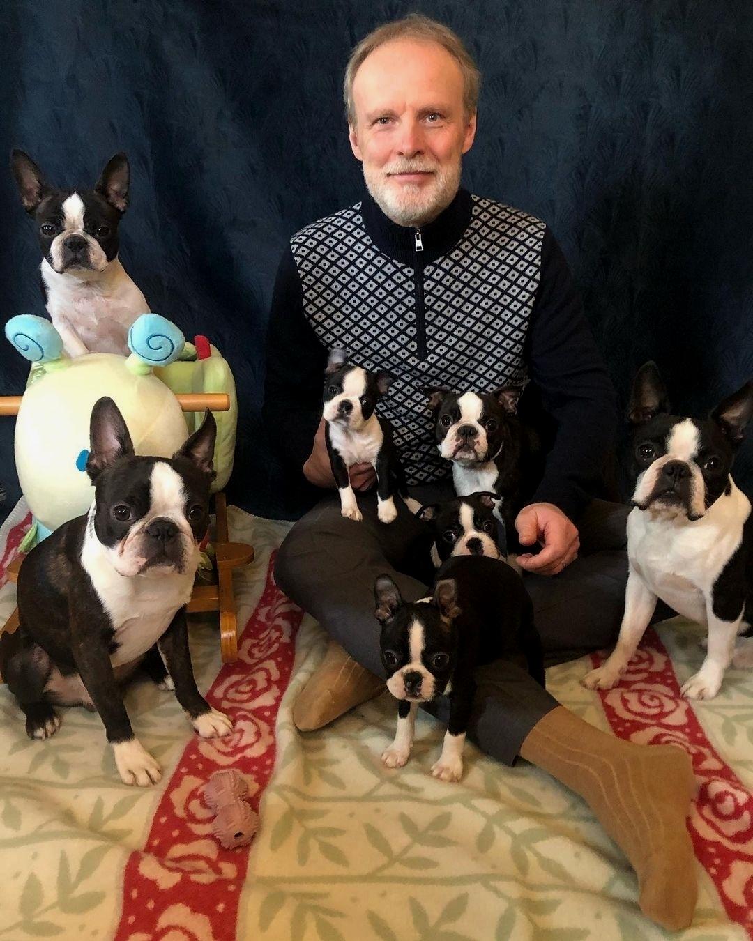 Chó Boston Terrier sinh sản và những vấn đề liên quan