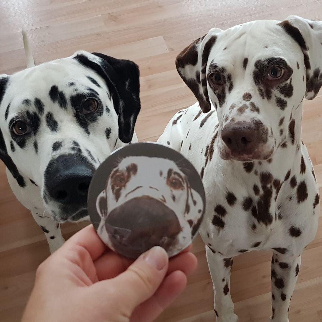 Giá chó Đốm phụ thuộc vào nhiều yếu tố