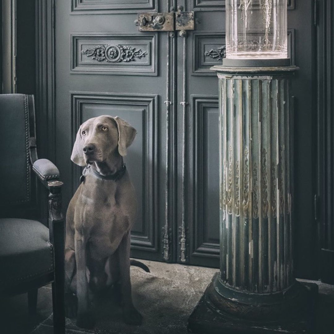 Phần đầu chó Đốm