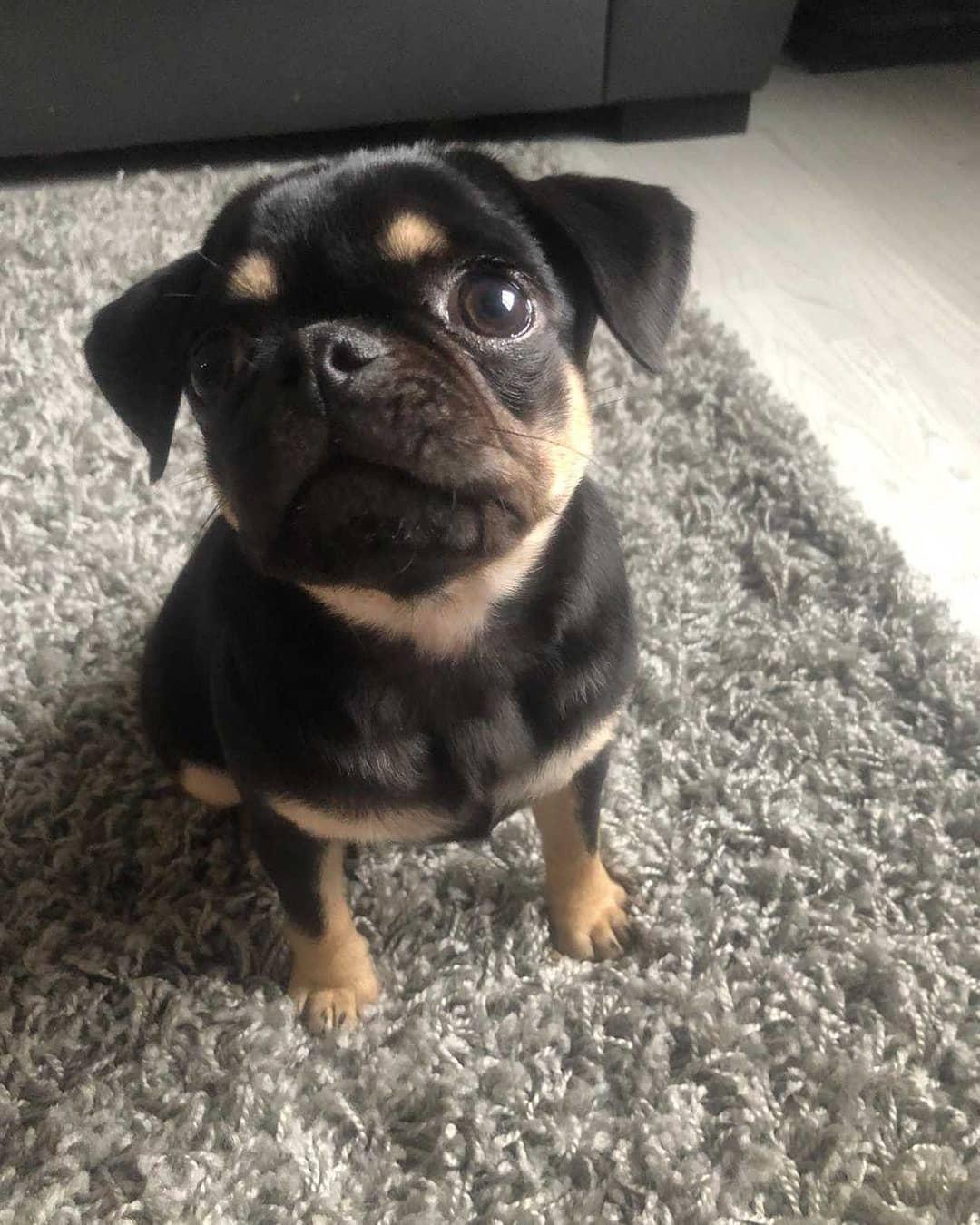 Khi chó mở tròn xoe mắt để lấy lòng bạn