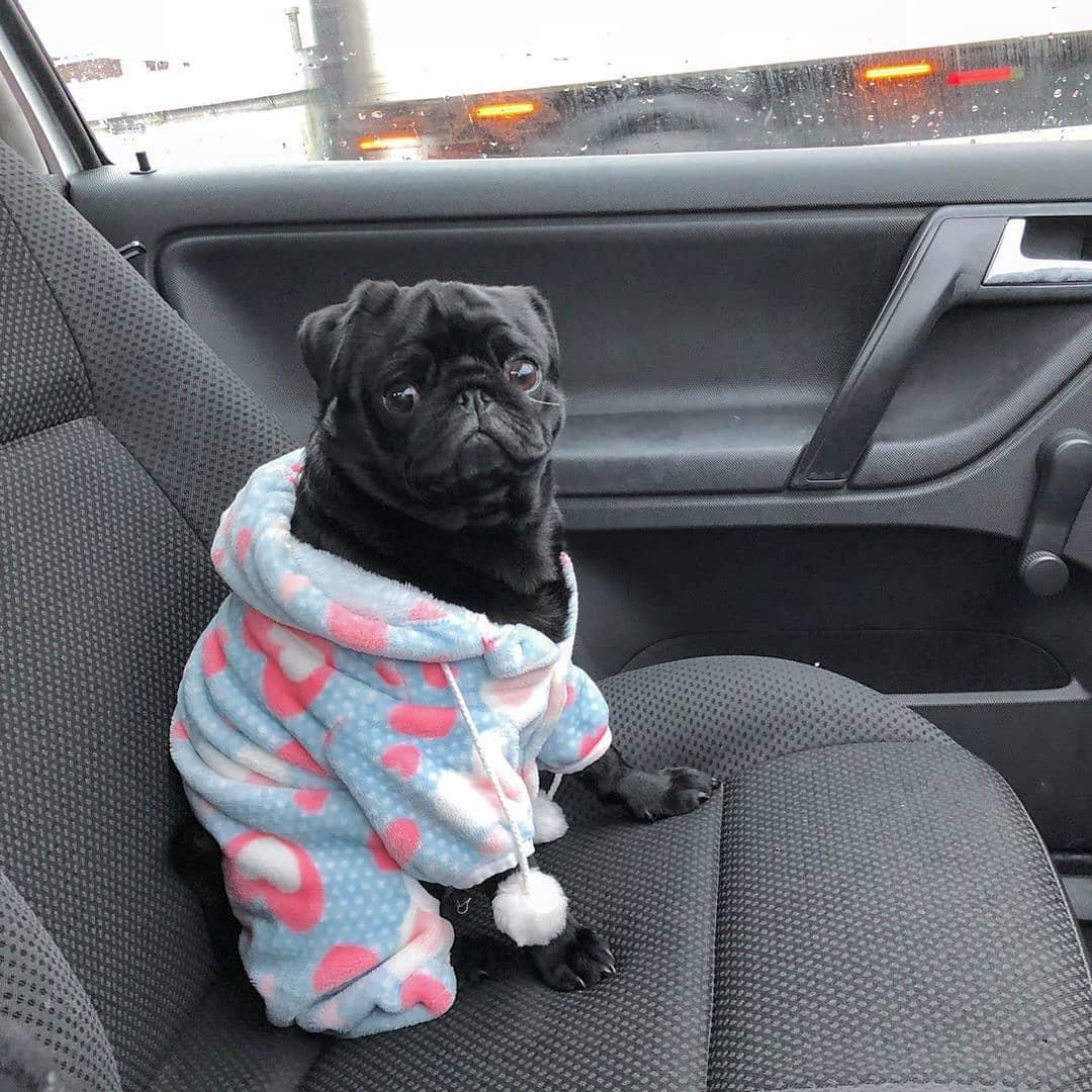 Mẹo đo và chọn quần áo cho chó của bạn