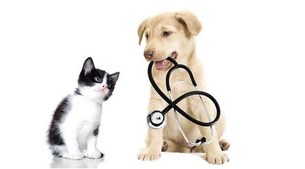 5 loại thuốc điều trị bệnh viêm tai giữa ở chó mèo