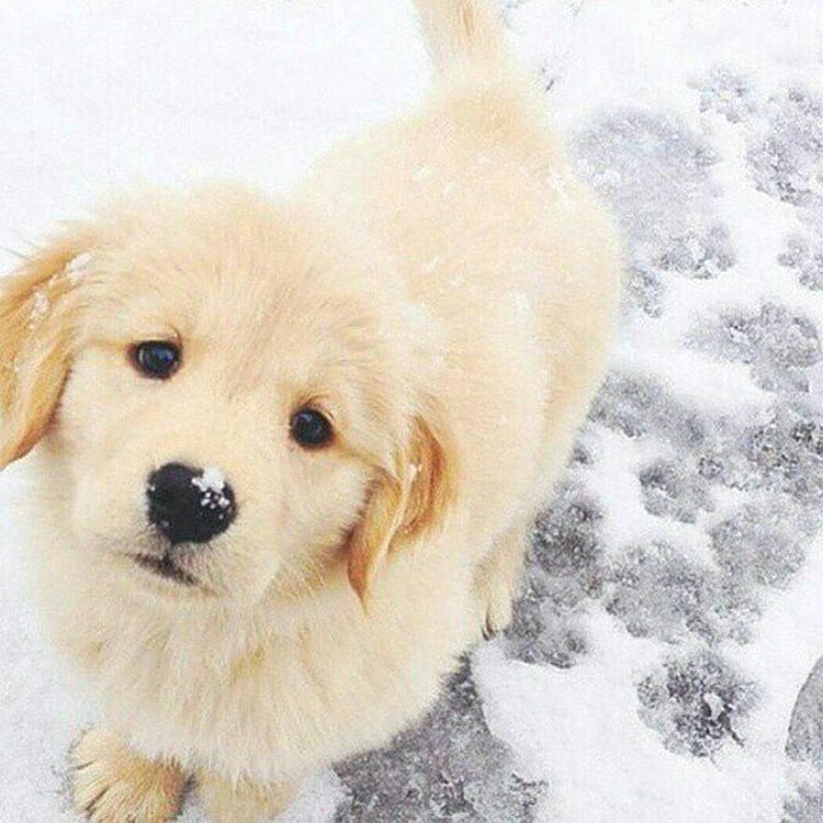 Giúp trẻ vượt qua nỗi buồn khi thú cưng bị mất