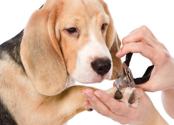 Cách cắt móng chân cho chó mèo an toàn