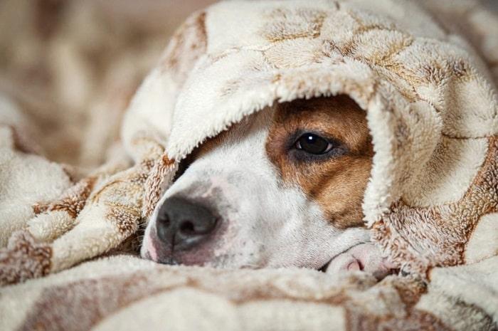 Giúp thú cưng vượt qua nỗi sợ hãi khi có giông bão