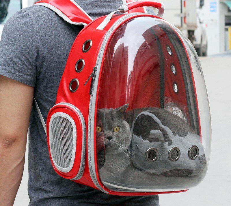 Lưu ý khi vận chuyển thú cưng bằng máy bay?
