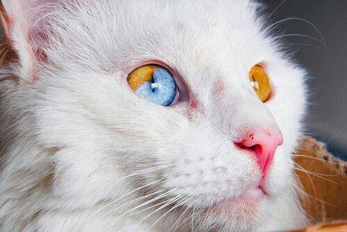 Mẹo để giữ cho mắt mèo con khỏe mạnh