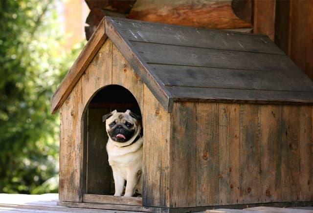 Nhà nuôi dưỡng tạm thời cho chó