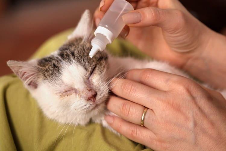 13 loại thuốc nhỏ mắt cho chó mèo hiệu quả nhất