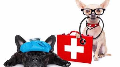 23 cách sơ cứu chó mèo gặp nguy hiểm 24/24 tại nhà