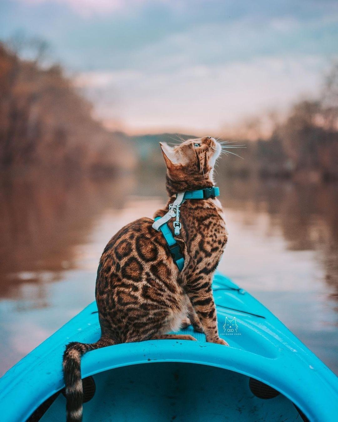 Cách xử khi mèo bị sặc nước hoặc chết đuối