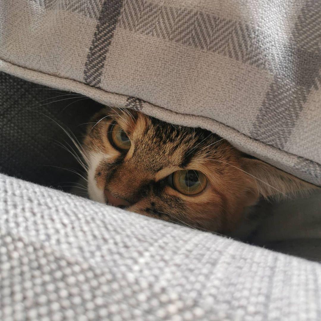 Giới thiệu mèo với các vật nuôi khác