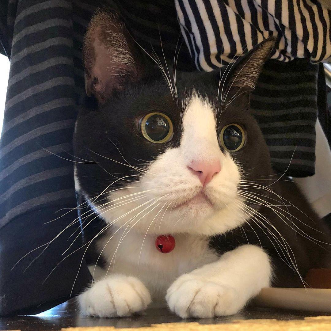 Dấu hiệu mèo bị viêm phế quản