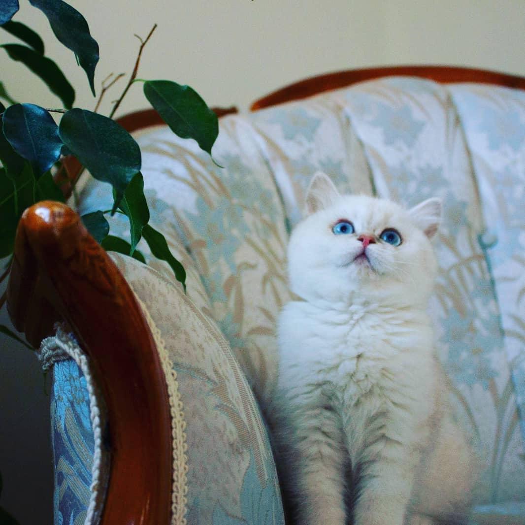Giữ an toàn cho mèo khi ở ngoài trời