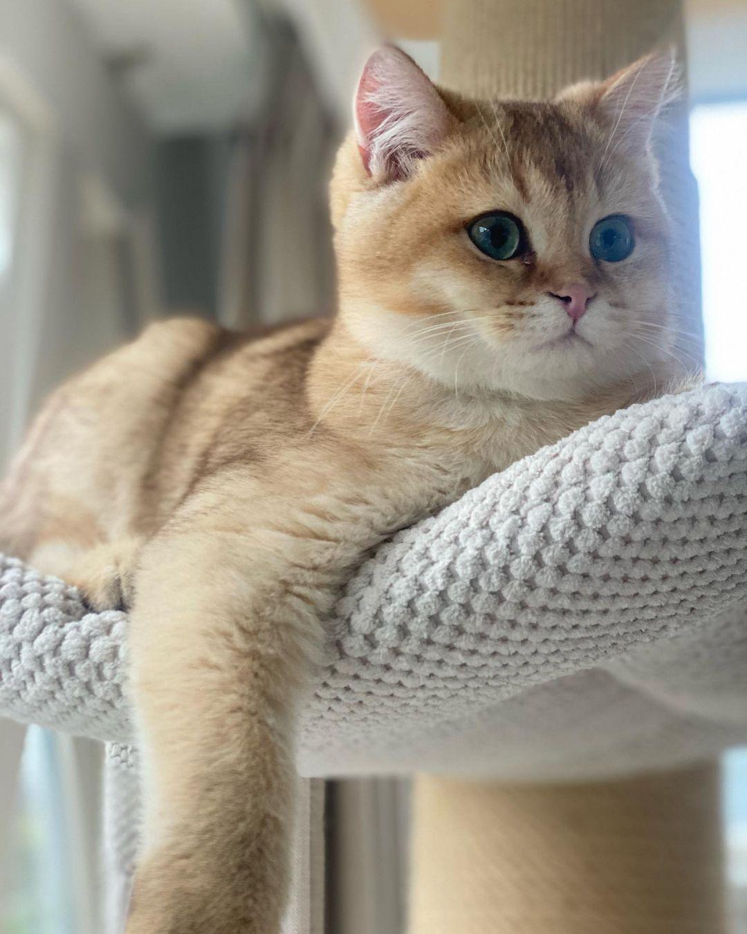Tại sao mèo bị căng sữa? Cách điều trị tại nhà hiệu quả