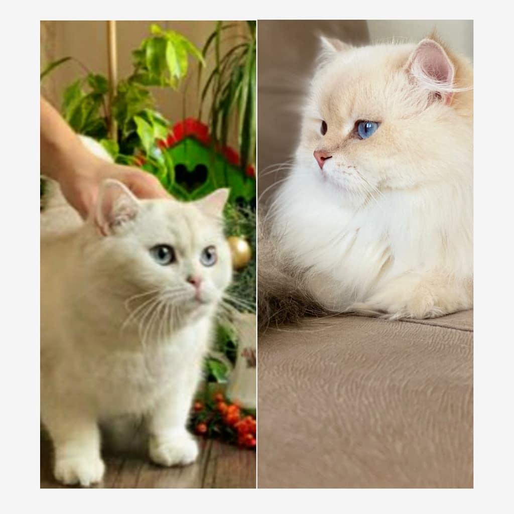 Cuộc chiến giữa các chú mèo