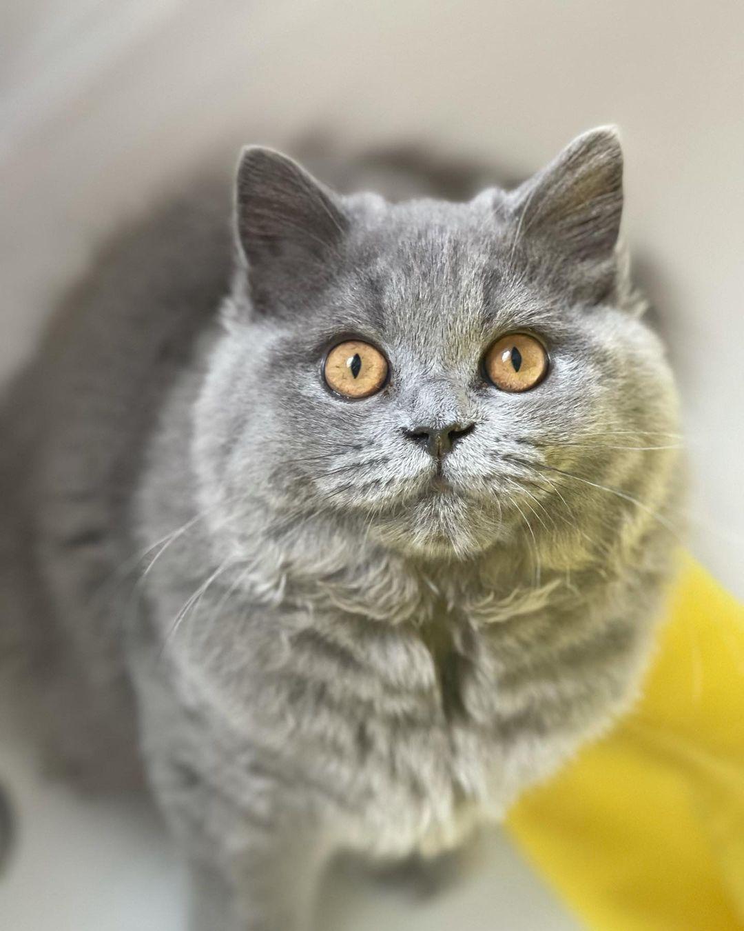 Viêm vú ở mèo - Những điều bạn cần biết để chăm sóc