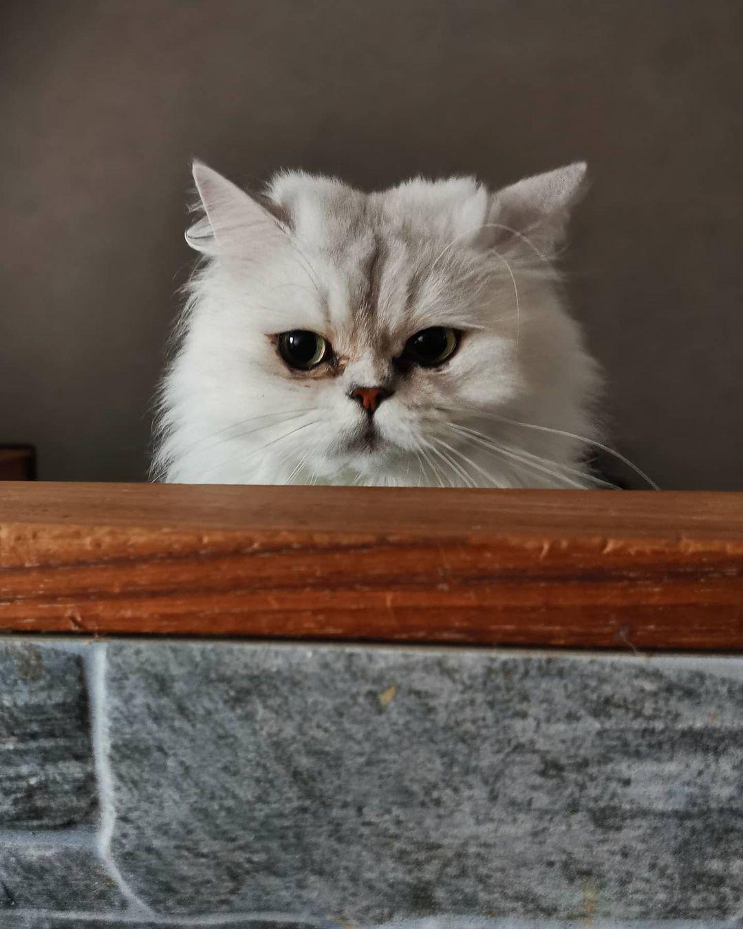 Biểu cảm vui nhộn của mèo