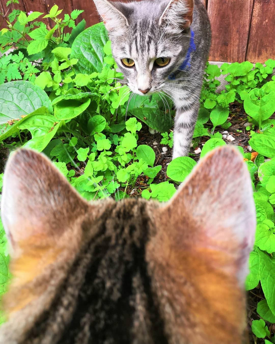 Chia sẻ cách để mèo làm quen với nhau