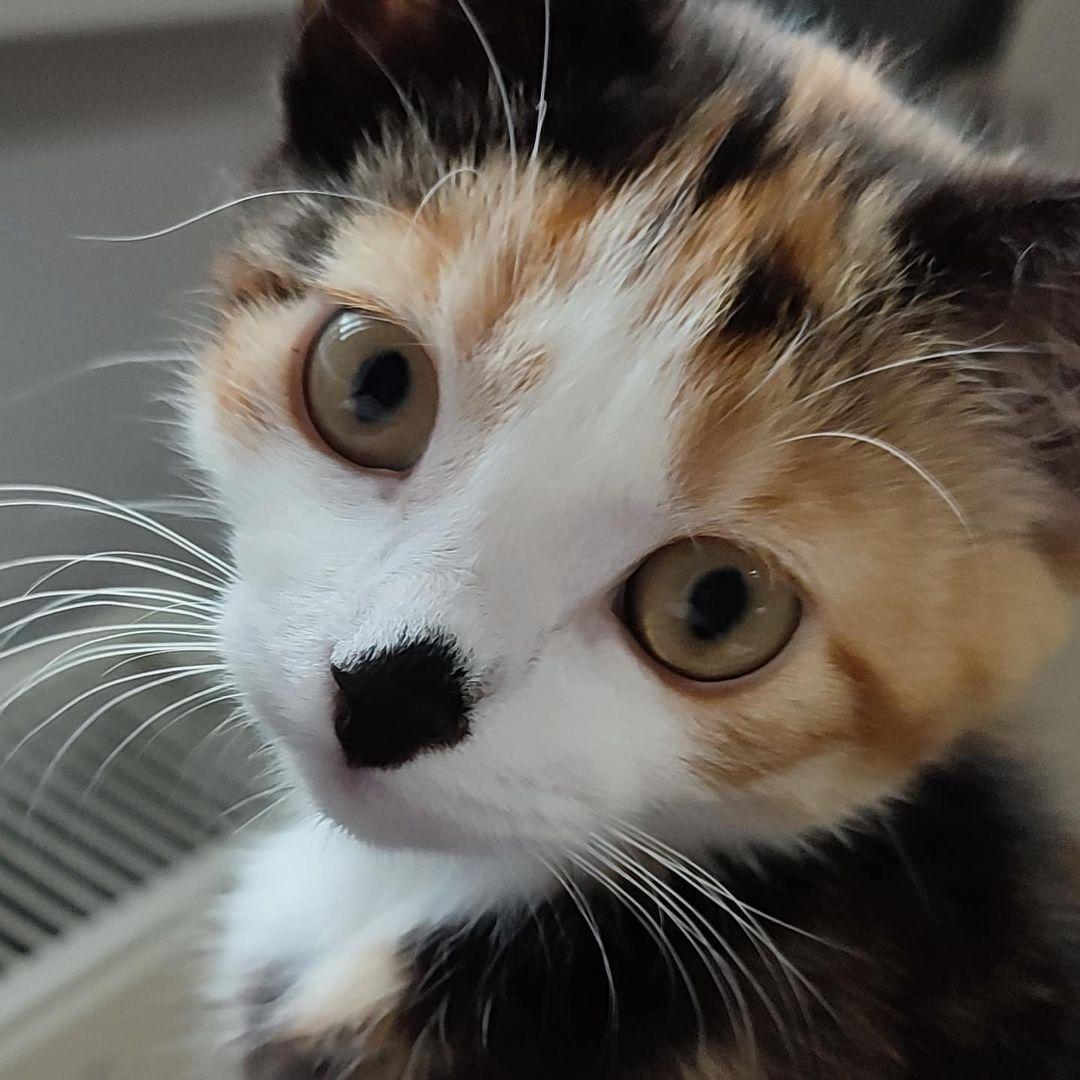 Những khả năng kỳ lạ của loài mèo