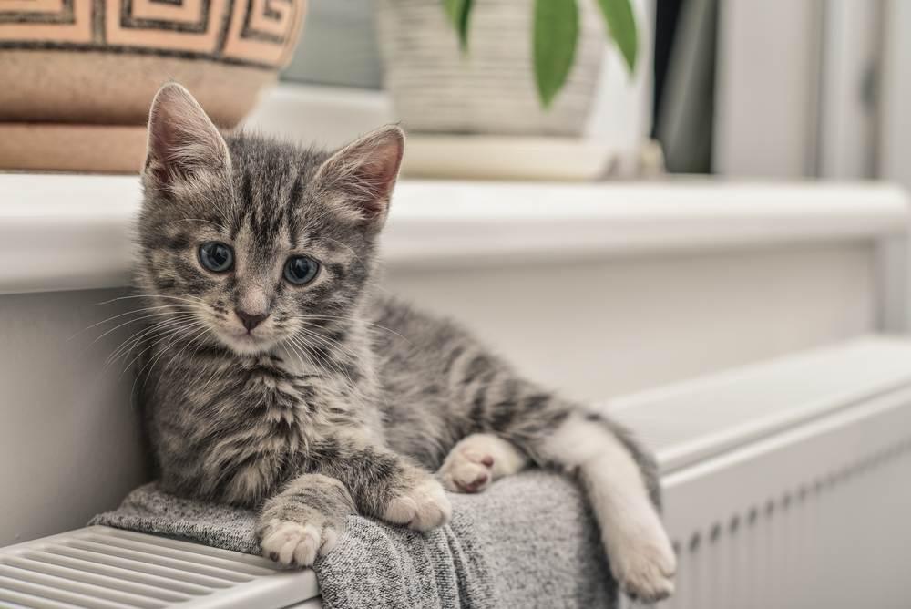 Hướng dẫn cách cho mèo con bú bình tốt nhất