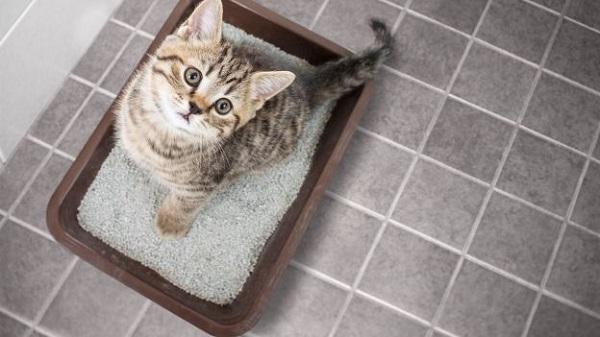 4 tiêu chí quan trọng khi chọn cát vệ sinh cho mèo