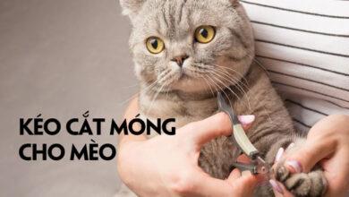 keo cat mong cho meo