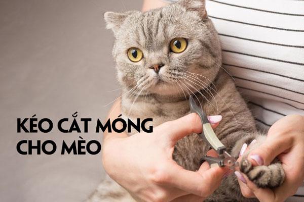 """Kéo cắt móng mèo có """"sánh ngang"""" với đồ cắt móng tay?"""
