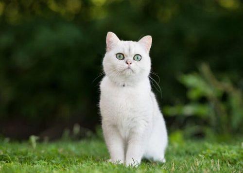 Mèo vào nhà có ý nghĩa gì? Tốt hay xấu, tốt hay xấu?