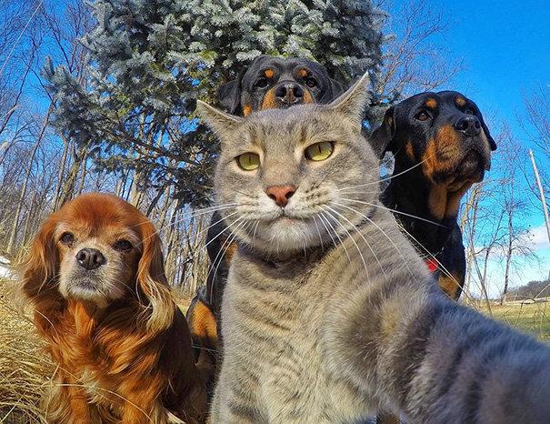 Hướng dẫn tải ứng dụng chụp ảnh chó mèo