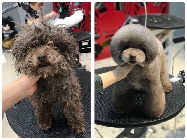 Dịch vụ cắt tỉa lông chó tốt nhất