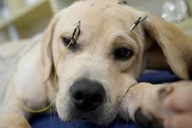 Các huyệt đạo dùng khi châm cứu cho chó mèo