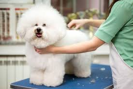 Spa cho thú cưng uy tín và chuyên nghiệp nhất