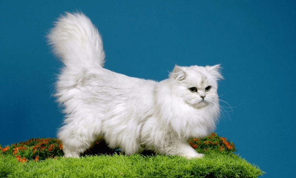 TOP 3 loại sữa tắm tốt nhất cho mèo trắng năm 2021