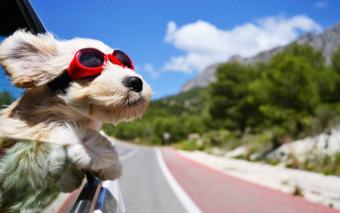 Kinh nghiệm khi đi du lịch cùng chó
