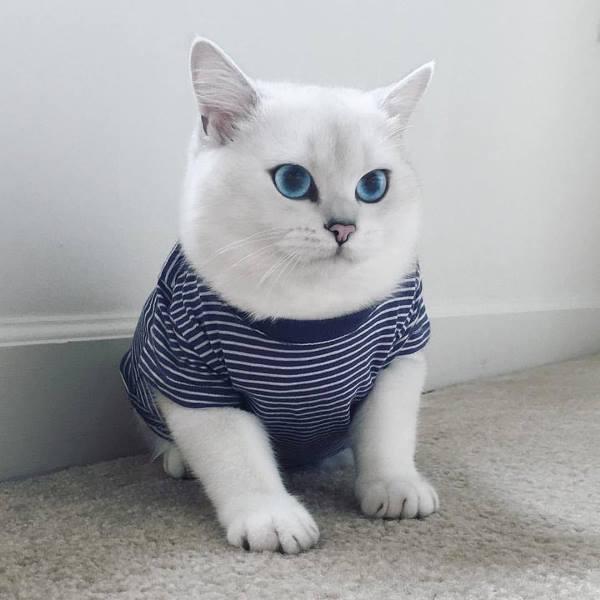 Soái ca Mèo đốn gục phái đẹp với đôi mắt trong veo