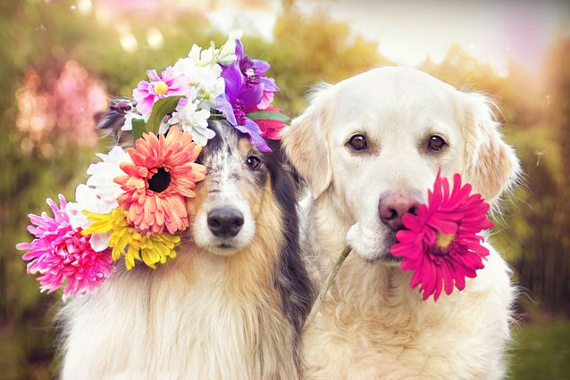 Những loại hoa an toàn với thú cưng