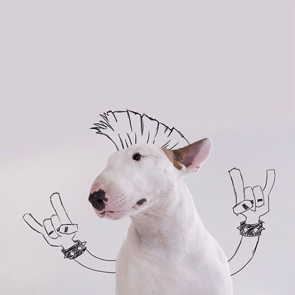 Bộ ảnh siêu cute của chủ nhân dành cho chó cưng