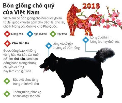 4 Giống chó cực kỳ khôn ngoan của Việt Nam