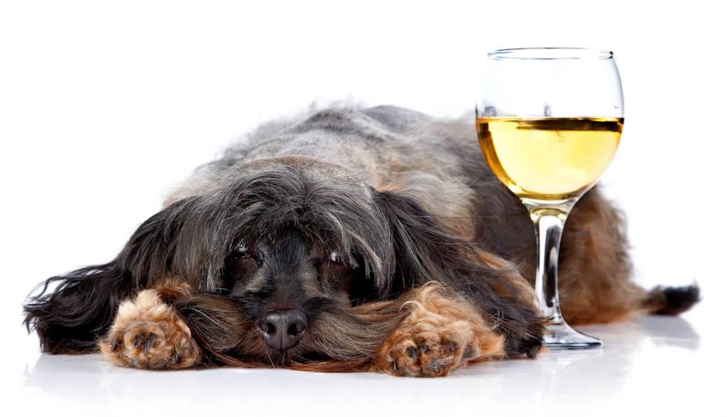 Kiếm hơn nửa triệu USD bán rượu cho chó mèo