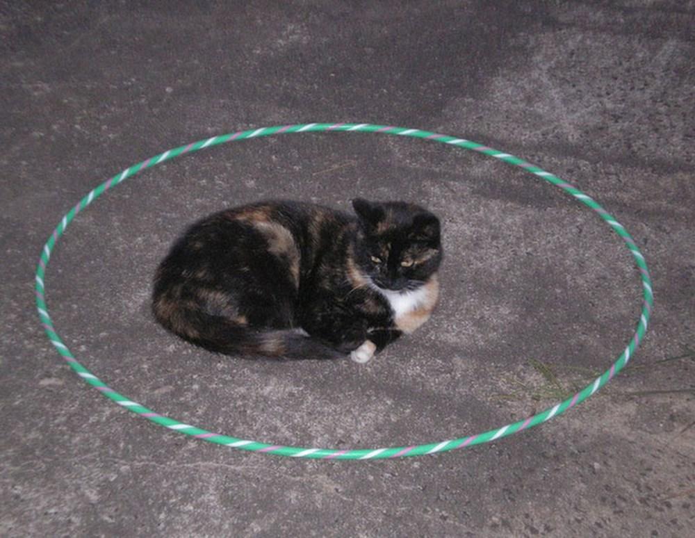 Lý do dán băng dính thành hình tròn mà mèo sẽ ngoan ngoãn ngồi vào?