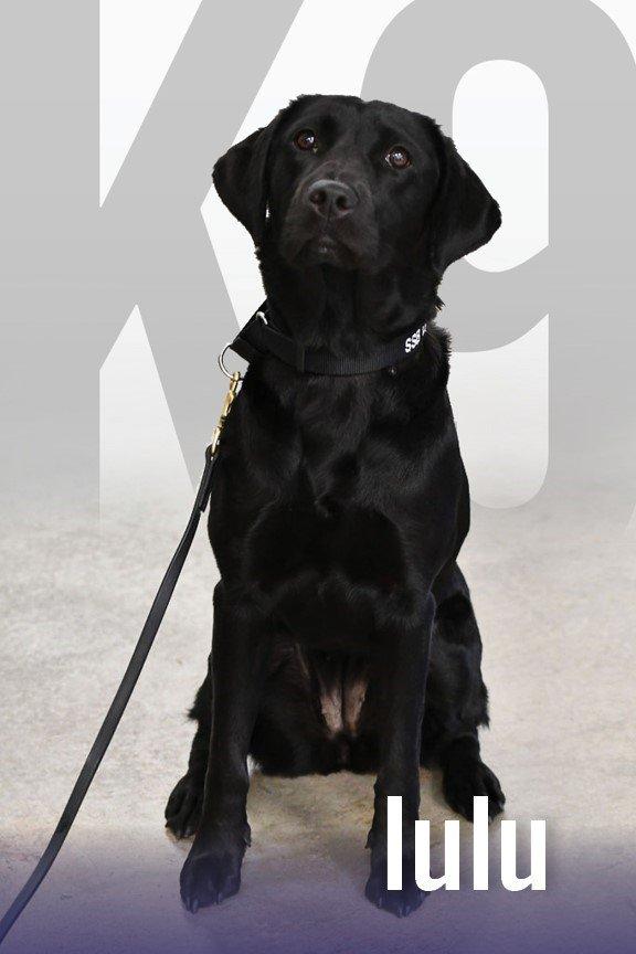 Chú chó điệp viên bị CIA trục xuất thành thú cưng