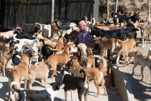 Triệu phú Trung Quốc phá sản sau khi nuôi hàng nghìn con chó