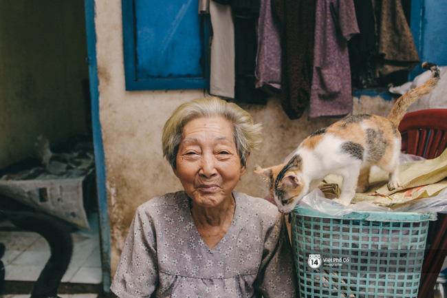 Bà lão nuôi hơn 50 con chó mèo hoang ở Sài Gòn