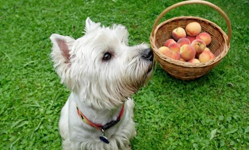 1607 fruit4